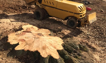 Stump Removal in Saugus MA Stump Removal Services in Saugus MA Stump Removal Professionals Saugus MA Tree Services in Saugus MA