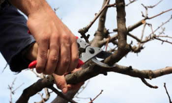 Tree Pruning in Saugus MA Tree Pruning Services in Saugus MA Quality Tree Pruning in Saugus MA