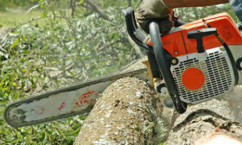 Tree Removal in Saugus MA Tree Removal Quotes in Saugus MA Tree Removal Estimates in Saugus MA Tree Removal Services in Saugus MA Tree Removal Professionals in Saugus MA Tree Services in Saugus MA