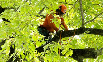 Tree Trimming in Saugus MA Tree Trimming Services in Saugus MA Tree Trimming Professionals in Saugus MA Tree Services in Saugus MA Tree Trimming Estimates in Saugus MA Tree Trimming Quotes in Saugus MA