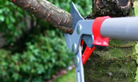 Tree Pruning Services in Saugus MA