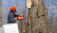 Tree Removal in Saugus MA